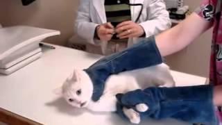 شاهد ماذا يحصل عندما تجلب قطة عند طبيب بيطري
