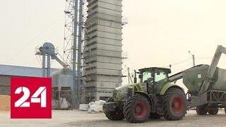 В Приморье осваивают новую методику выращивания кукурузы