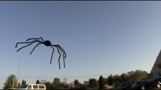 getlinkyoutube.com-FLYING SPIDER PRANK! - Tom Mabe Halloween Pranks