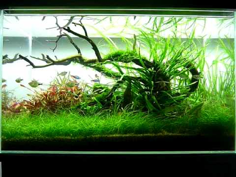 George Farmer's 60 litre nature aquarium