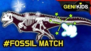 Dinosaurs Fossil Match 공룡 뼈 조립! 카르노타우루스 티라노사우루스 코엘로피시스 딜로포사우루스★지니키즈