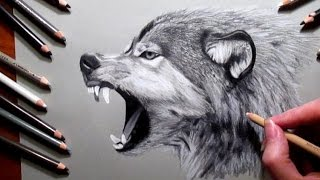 getlinkyoutube.com-How to Draw a Wolf Pencil #drawing | Jasmina Susak Speed drawing of a wolf