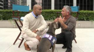 getlinkyoutube.com-'Dog Whisperer' on Getting Over the Fear of Dogs
