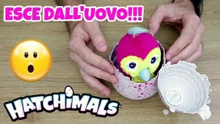 getlinkyoutube.com-INCREDIBILE APERTURA UOVA HATCHIMALS: SI SCHIUDONO VERAMENTE