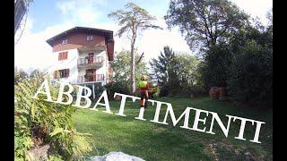 getlinkyoutube.com-Abbattimento Pino Marittimo in Tecnica Tree Climbing - Time Lapse - Stihl ms 362 c-m Test