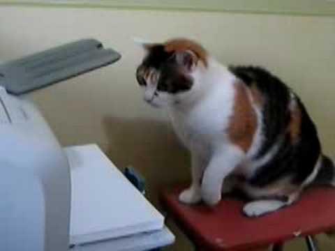 Cat solves printer problems