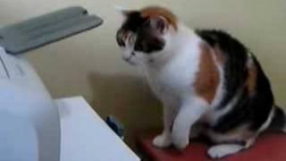 Kotek chciał skorzystać z drukarki