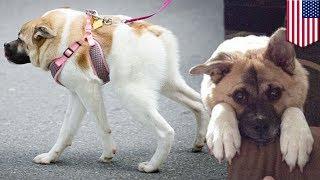 getlinkyoutube.com-Czasem pół psa to wszystko czego potrzebujesz!