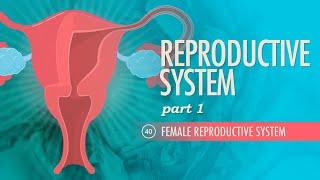 Reproductive System, part 1 - Female Reproductive System: Crash Course A&P #40 width=
