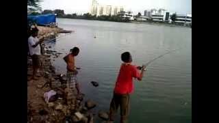 "getlinkyoutube.com-Mancing Patin danau sunter ""6,2kg"""