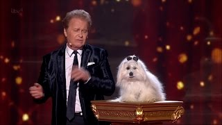 getlinkyoutube.com-Britain's Got Talent 2015 S09E14 Semi-Finals Marc Métral and Miss Wendy The Singing Dog