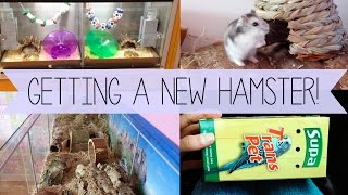getlinkyoutube.com-Getting a New Hamster! | Vlog