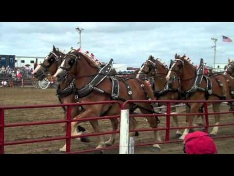 Britt Draft Horse Show 2013