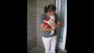 getlinkyoutube.com-Puppy Surprise