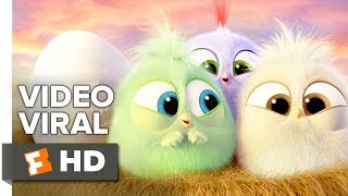 getlinkyoutube.com-The Angry Birds Movie VIRAL VIDEO - Hatchlings Mother's Day (2016) - Jason Sudeikis Movie HD