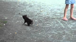 getlinkyoutube.com-Baby Hyena