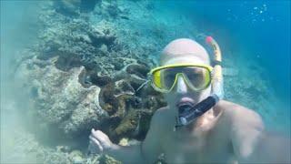 getlinkyoutube.com-Almejas gigantes Palaos (giant clams Palau)