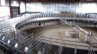 Мега Ферма на 8000 голов КРС
