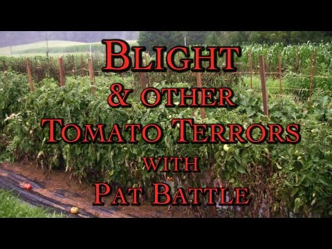Blight & Other Tomato Terrors