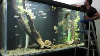 getlinkyoutube.com-Huge Aquarium