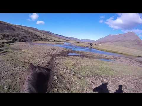Rounding up horses in North West Iceland  2
