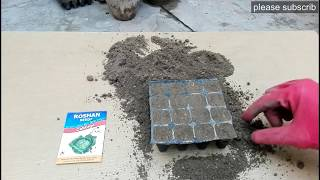 How to Grow Cabbage form Seeds at home kitchen gardening
