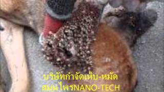 getlinkyoutube.com-กำจัดเห็บหมัด สมุนไพรNANO TECH โทร.086-461-3311