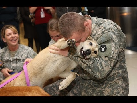 Dogs Welcoming Soldiers Home Compilation 2013 [HD]