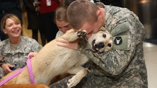 getlinkyoutube.com-Dogs Welcoming Soldiers Home Compilation 2012