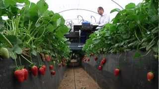 getlinkyoutube.com-Agrobot Strawberry Harvester