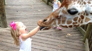 FORGET-CATS-Funny-KIDS-vs-ZOO-ANIMALS-are-WAY-FUNNIER-TRY-NOT-TO-LAUGH width=