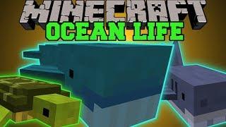 getlinkyoutube.com-Minecraft: OCEAN LIFE (NEW OCEAN MOBS, CREATE YOUR OWN AQUARIUM!) Mod Showcase