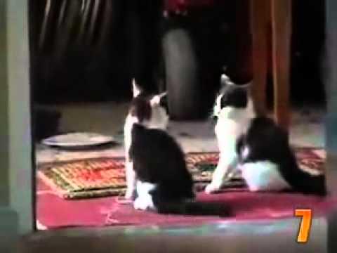Za ljubitelje mačaka