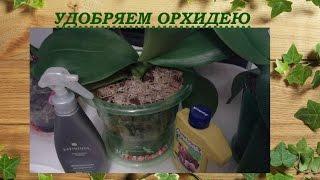 getlinkyoutube.com-Удобрение орхидеи Фаленопсис