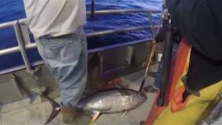 Talica 25 in action with a 70 LB Yellowfin Tuna out of Hudson Canyon