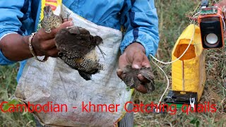 getlinkyoutube.com-How to Find quail - Cambodian - khmer Catching Birds - Find quails in Pailin Province