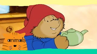 getlinkyoutube.com-Paddington Bear - The Amazing Paddington