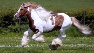 getlinkyoutube.com-Красивые лошади мира / Beautiful horse world