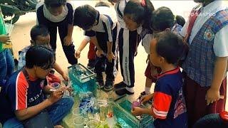 getlinkyoutube.com-Penjual Ikan Cupang