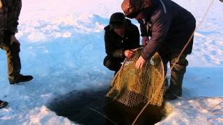 getlinkyoutube.com-Рыбалка на налима