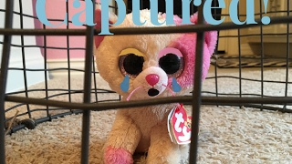 getlinkyoutube.com-Beanie Boo's: Captured!