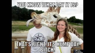 getlinkyoutube.com-Best Hump Day Memes - Volume 2