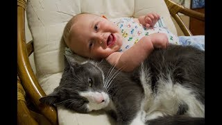 Cats Meeting Babies for the First Time Compilation 2015