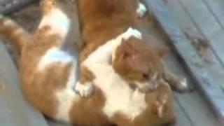 getlinkyoutube.com-extreme cat fight