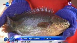getlinkyoutube.com-เกษตรทำเงิน : เลี้ยงปลาหมอสร้างรายได้ที่บางปลาม้า