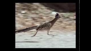 getlinkyoutube.com-Roadrunner 26 mph