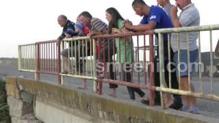 getlinkyoutube.com-Dezastru ecologic pe Calmatui. Zecii de mii de pești morți in dreptul localitatii Smeeni