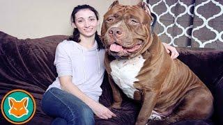 getlinkyoutube.com-أكبر 10 حيوانات في العالم !!