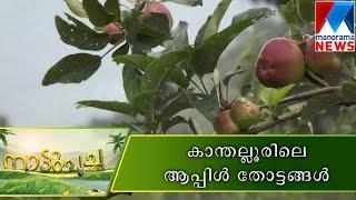 getlinkyoutube.com-Apple orchards of Kanthalloor  |  Manorama News | Nattupacha