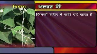 getlinkyoutube.com-Ayurvedic Benefits of Vidhara for Alsar   Acharya Balkrishna